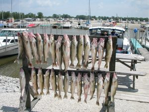 Lake Erie fishing charters walleye